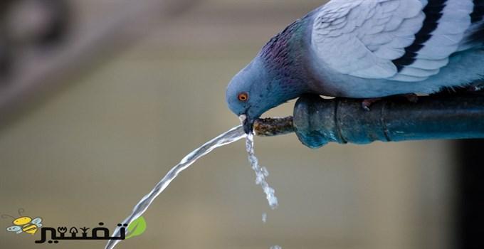 الميت يسقيني ماء