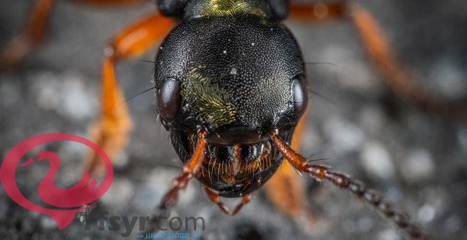 النمل في المنام للامام الصادق