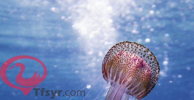 حلم البحر والسمك