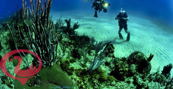 تفسير حلم السباحه في البحر والخروج منه