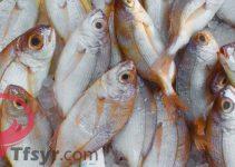 تفسير حلم السمك في المنام لابن سيرين
