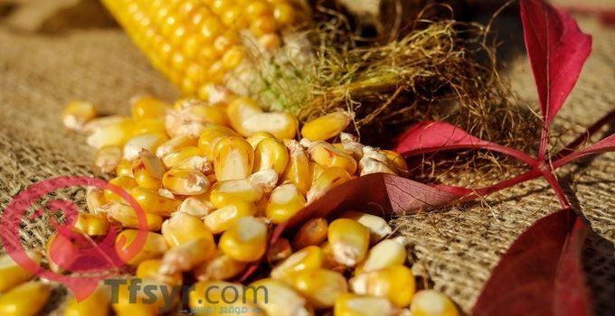 حبوب الذرة في المنام