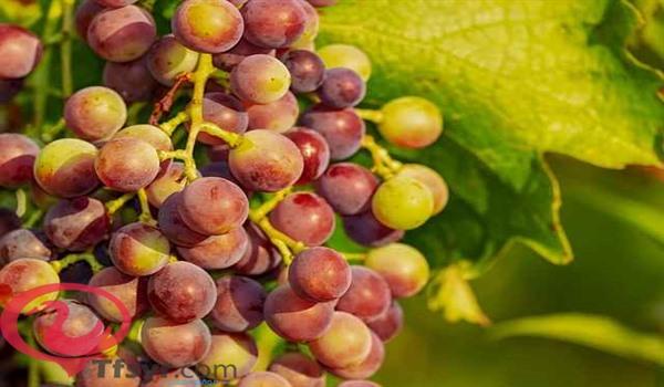 اكل العنب في المنام