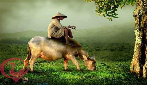 البقرة في المنام للامام الصادق