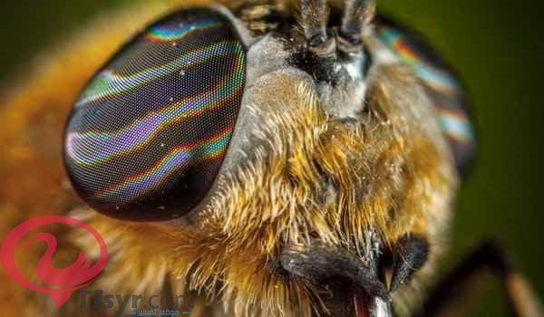 الخوف من النحل في المنام