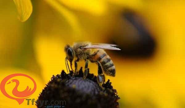 تفسير رؤية خلية النحل في المنام للعزباء